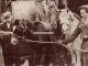 Four Legged Hero of Hafod Colliery